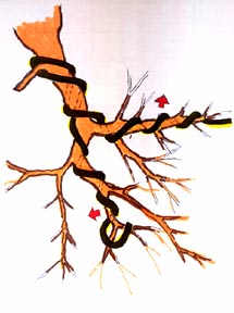 Enjoyable Wire Choices When Styling A Bonsai Tree East Bay Bonsai Society Wiring Digital Resources Funapmognl
