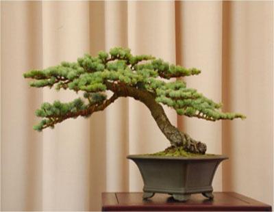 file 13 pine 44x 310